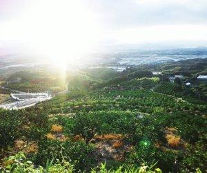 大隅果樹園